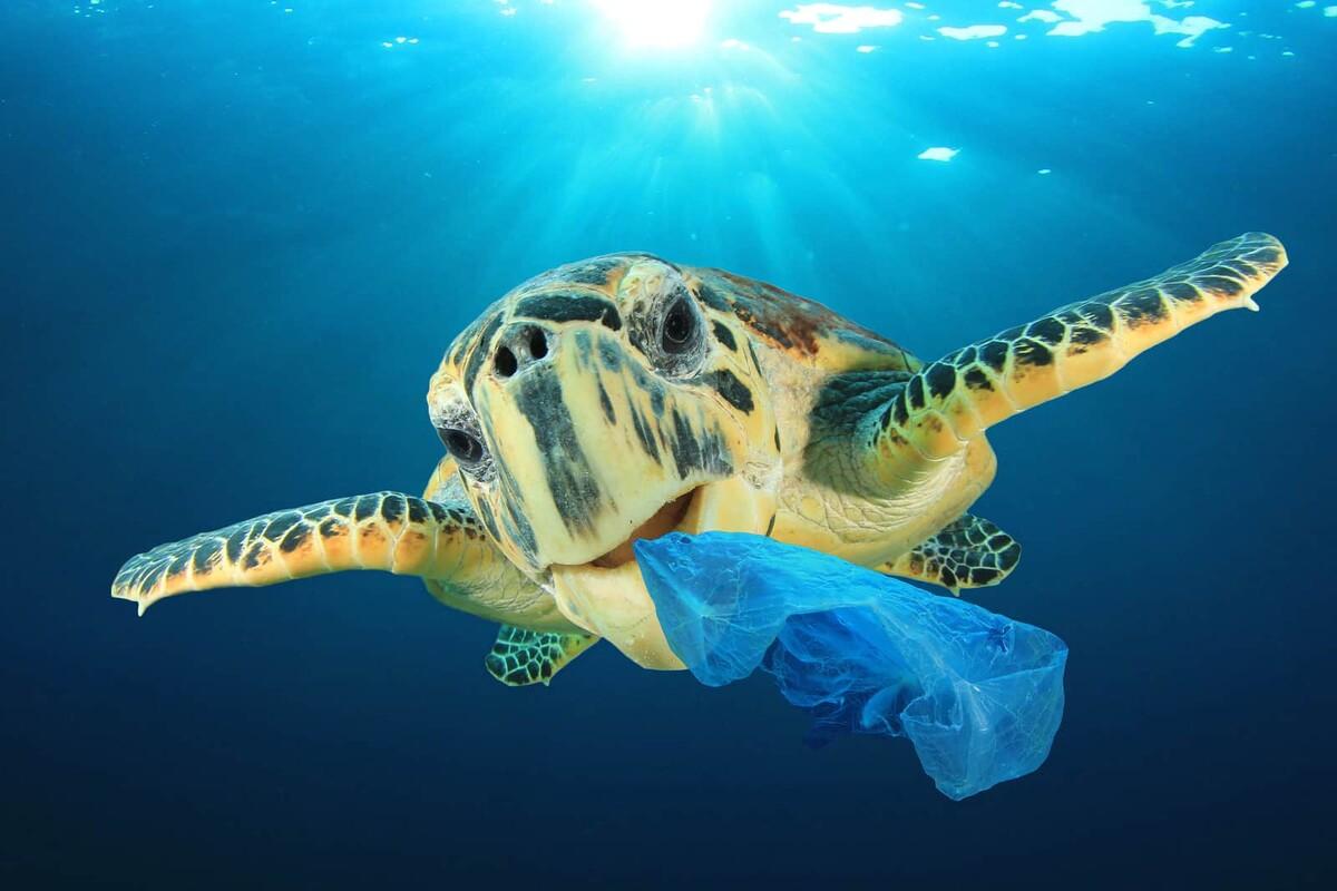 Poluição plástica: como o consumo continua poluindo o planeta